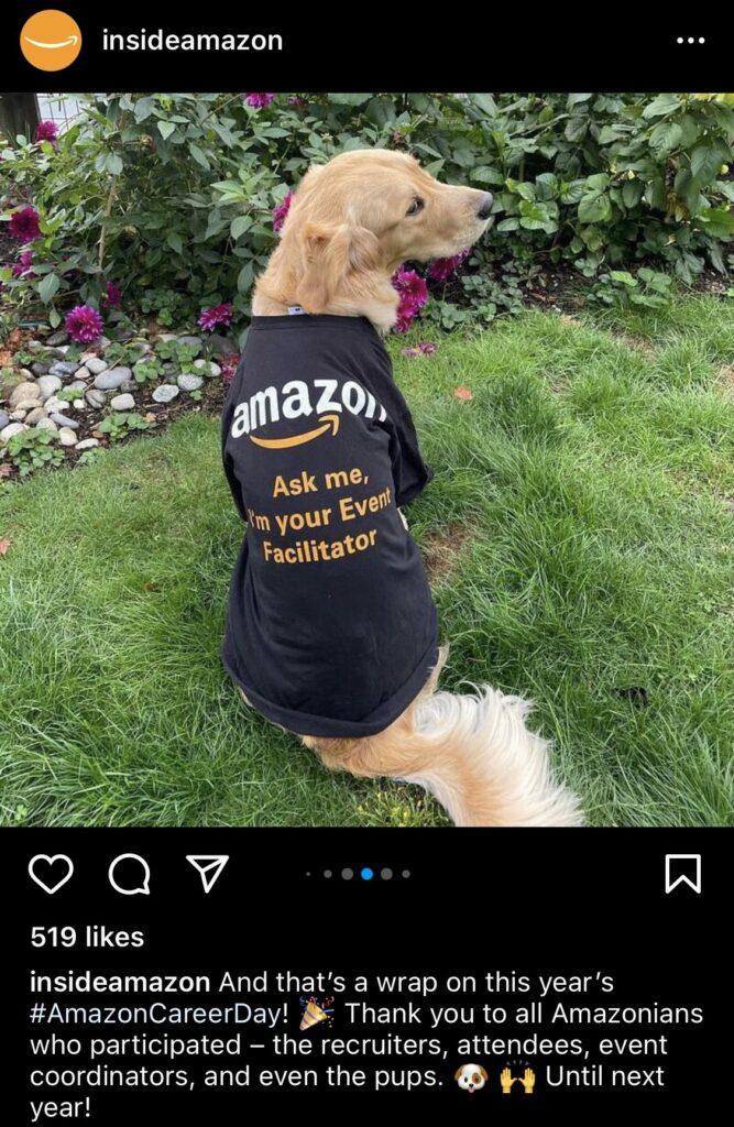 Dog wearing an Amazon shirt.